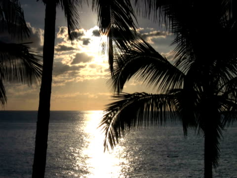 ntsc : 海岸 - 顕花植物点の映像素材/bロール