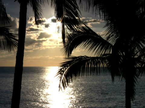 pal: coast - 枝 植物部分 個影片檔及 b 捲影像