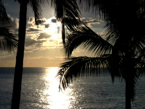 pal : 海岸 - 顕花植物点の映像素材/bロール