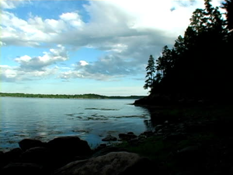 cobscook state park - pinacee video stock e b–roll