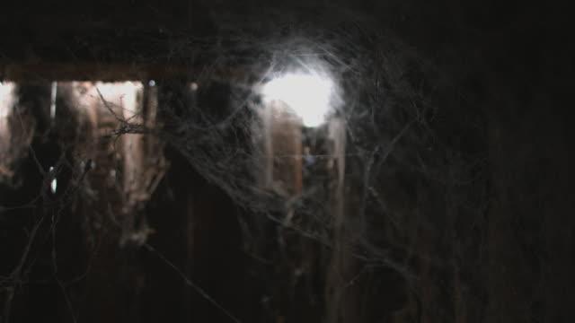 cobweb or spider web video