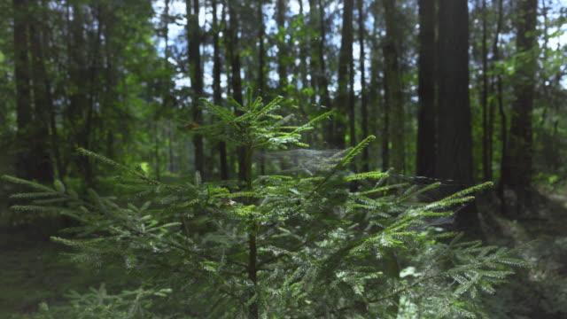 en spindelväv gungar i vinden på ett grönt träd - spindelväv bildbanksvideor och videomaterial från bakom kulisserna