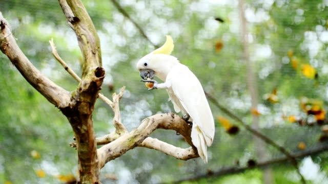 cockatoo feeding on tree.