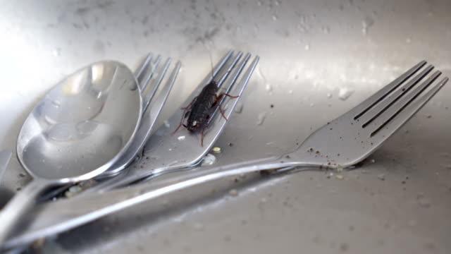 kakerlake in küchenspüle - essgeschirr stock-videos und b-roll-filmmaterial