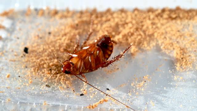 cockroach struggled rapidly after eating some cockroach killer - vídeo
