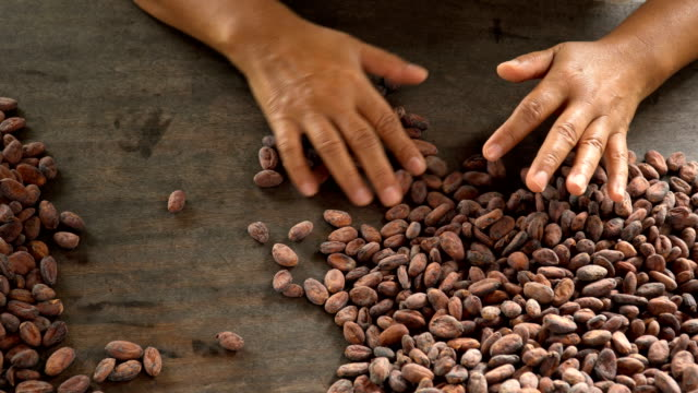 Cocoa beans and cocoa pod on a wooden surface. video