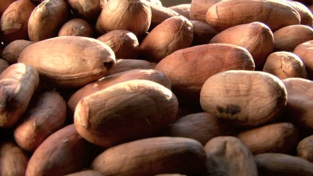 vídeos de stock, filmes e b-roll de cocoa beans. cacau en grano - chocolate quente