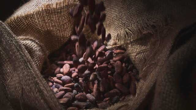 cocoa beans - theobroma video stock e b–roll