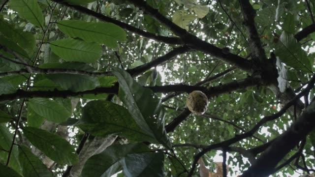 vídeos de stock e filmes b-roll de cocoa seeds - cacau em pó