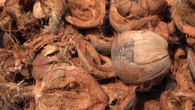 kokosfiber - skalhylsa bildbanksvideor och videomaterial från bakom kulisserna