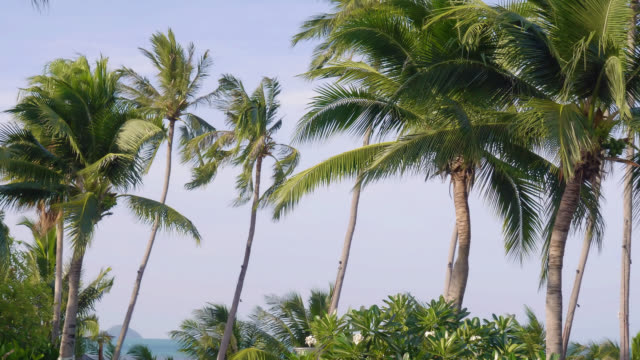 stockvideo's en b-roll-footage met blad palm kokospalm met hemelachtergrond - plantdeel