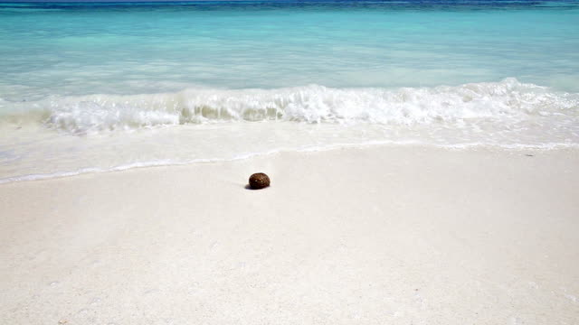 Coconut on crystal clear sea and white sand beach video