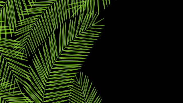 Coconut palm leaves transparent frame moving by the wind looping and copy space animation 4K on black background with alpha channel Coconut palm leaves transparent frame moving by the wind looping and copy space animation 4K on black background with alpha channel tropical climate stock videos & royalty-free footage