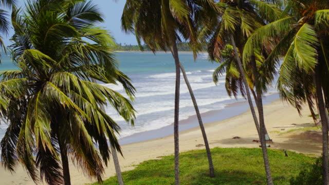 Coconut palm tree on tropical beach Alagoas, Beach, Brazil, Coconut Palm Tree, Northeastern Brazil coconut palm tree stock videos & royalty-free footage
