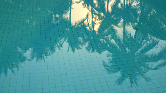 coconut palm tree shadow reflect on swimming pool - vídeo