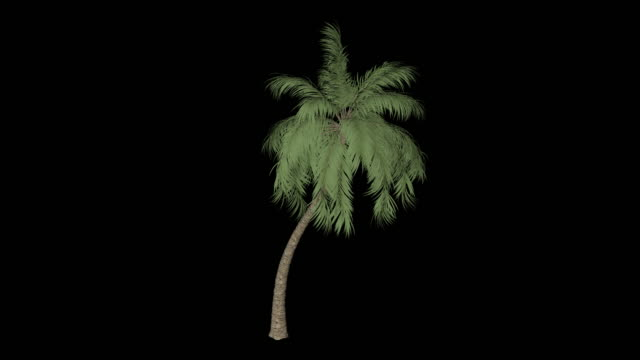 palma kokosowa - palm tree filmów i materiałów b-roll