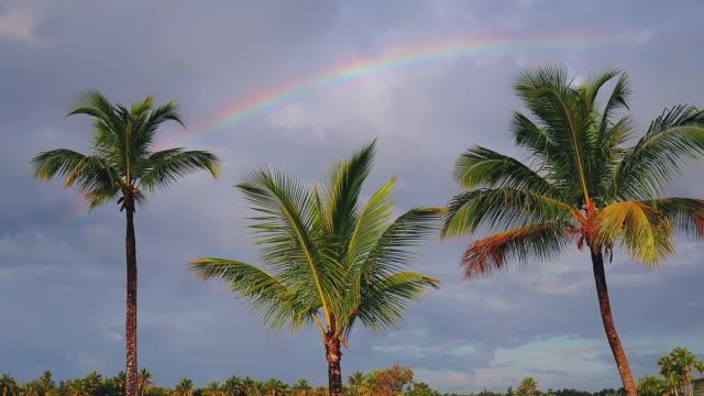 stockvideo's en b-roll-footage met kokospalm bomen en regenboog tegen blauwe tropische hemel met wolken. zomer tropische vakantie - regen zon
