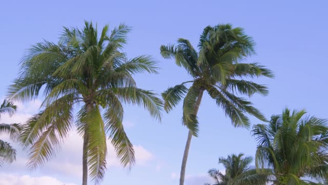 Coconut palm trees bottom view. Tropical scene video