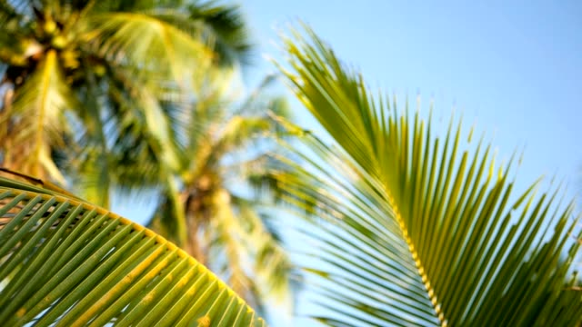 coconut palm trees crowns against blue sunny sky perspective view from the ground. - exotic stock videos & royalty-free footage