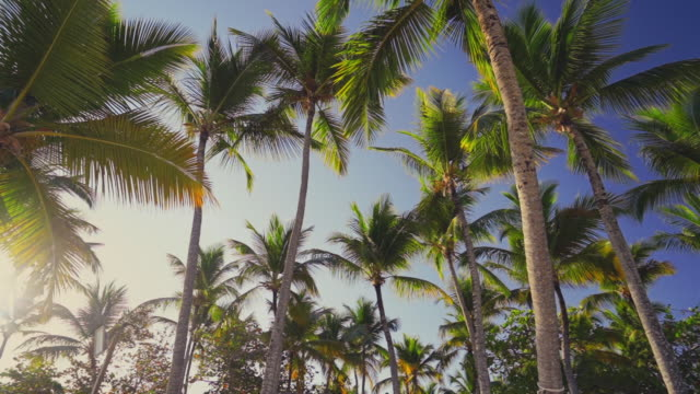 Coconut palm trees on tropical beach against blue sky