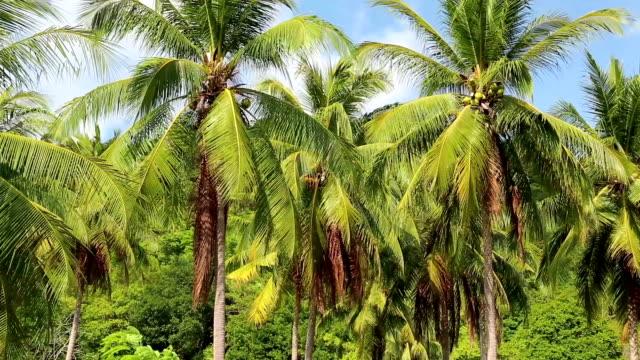 vídeos y material grabado en eventos de stock de cocoteros en la isla de koh chang, tailandia - río yangtsé