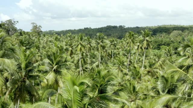 Coconut plantation aerial, Sri Lanka
