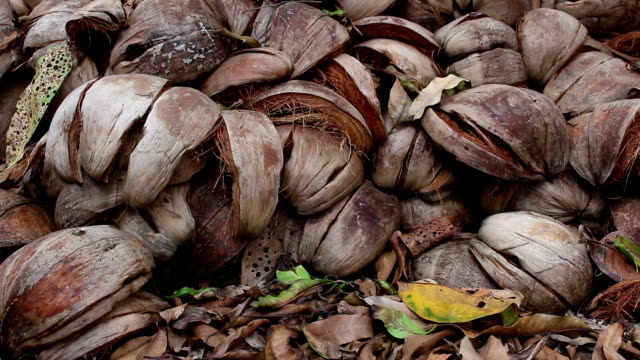 coconut shell bakgrund - kokosfiber bildbanksvideor och videomaterial från bakom kulisserna