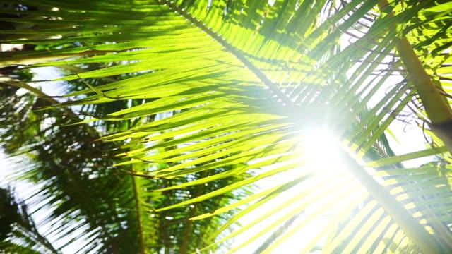 coconut tree leaves sea beach summer beach relaxing seaside sunlight and beautiful - summer background стоковые видео и кадры b-roll