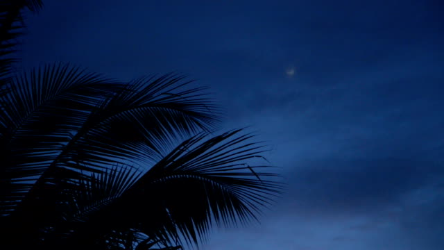 kokosnuss baum top am abend am strand - palme stock-videos und b-roll-filmmaterial