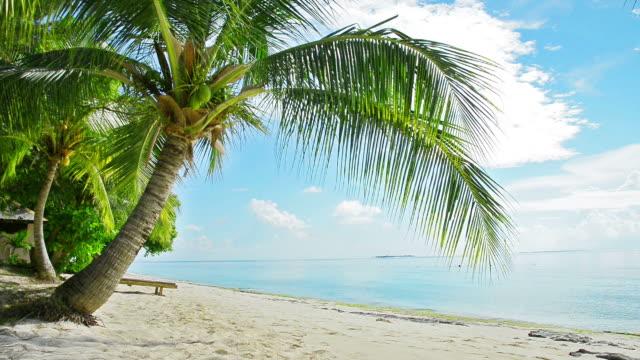 coconut tree coconut tree on beach coconut palm tree stock videos & royalty-free footage