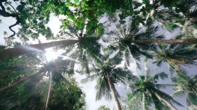 Coconut trees against sky Coconut trees against sky coconut palm tree stock videos & royalty-free footage