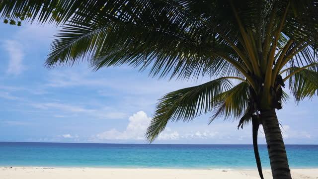 vidéos et rushes de cocotiers arbres et palm tree.luxury beach vacances d'été en asie voyage. - arbre tropical