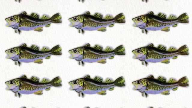cod fish pattern, ideal footage for themes such as mediterranean cuisine, mediterranean fish