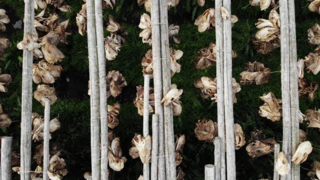 vídeos de stock e filmes b-roll de cod stockfish drying on racks, lofoten islands norway - lofoten