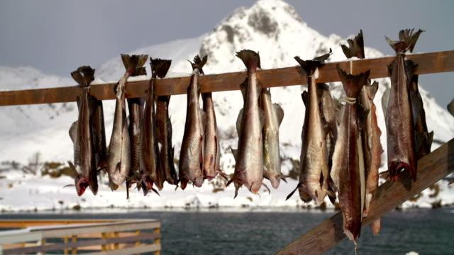 vídeos de stock e filmes b-roll de bacalhau, peixe seco - bacalhau