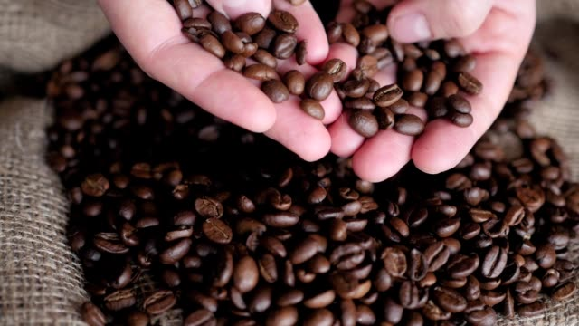 coffee beans in hands video