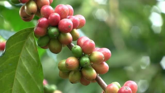 Coffee beans (closeup) video