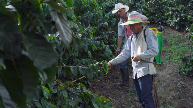 coffee farmers fumigating the coffee crop - coffee farmer video stock e b–roll