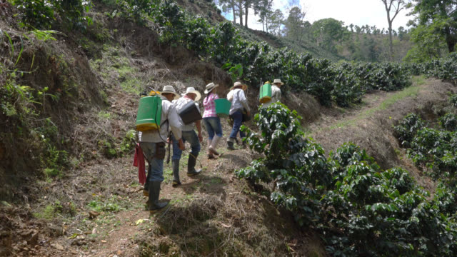 coffee farmers walking up the hill to collect and fumigate the coffee plants - coffee farmer video stock e b–roll