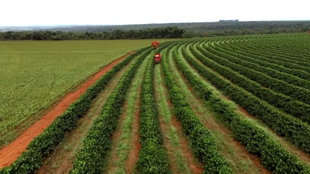 kahve hasat - minas gerais eyaleti stok videoları ve detay görüntü çekimi