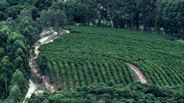 vídeos de stock, filmes e b-roll de plantação de café sul de belo horizonte-vista aérea-minas gerais, ritápolis, brasil - plantação