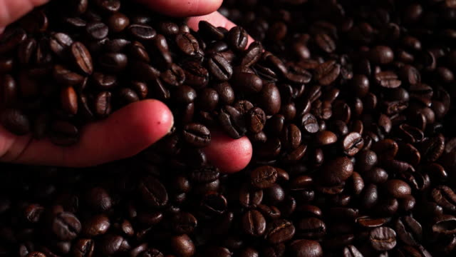 Coffee Trader Examining Roasted Arabica Coffee Beans video