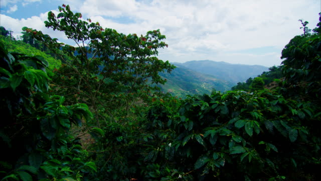 Coffee trees sit in the rural mountains in Central America. This shows the scope of coffee, and where it originates! video
