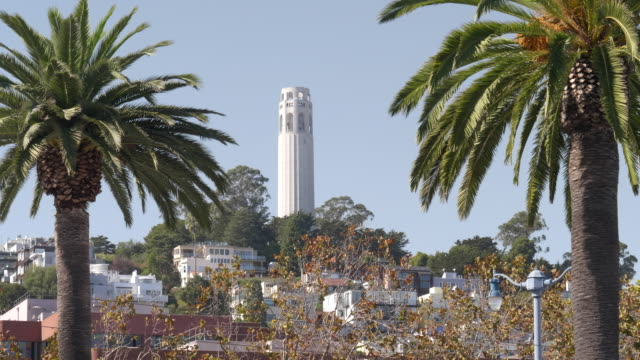 coit tower framed by palm trees in san francisco