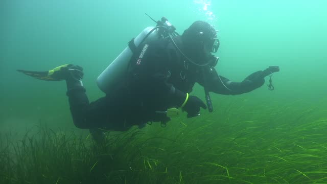 Cold water Diver Diver in drysuit using compass sea life stock videos & royalty-free footage