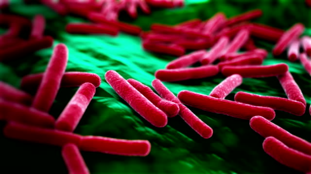 E. Coli Virus Hintergrund – Video