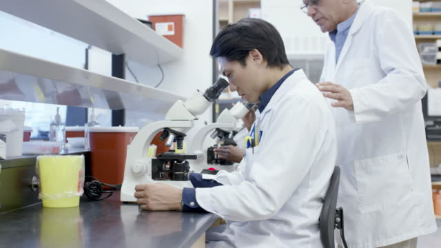Colleagues working in laboratory discuss medical sample results