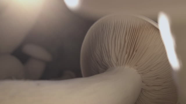 Collect mushrooms that are grown on the farm