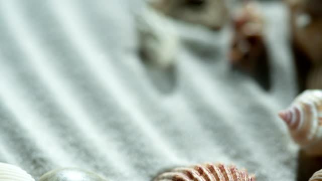vídeos de stock e filmes b-roll de collection of seashells - bugio