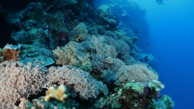 vídeos y material grabado en eventos de stock de color coral reef, palau - palaos